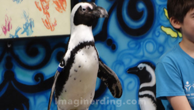 Ripleys-Aquarium-Smokies-Penguin-Encounter