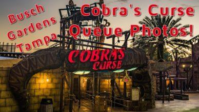 cobras-curse-queue-fi