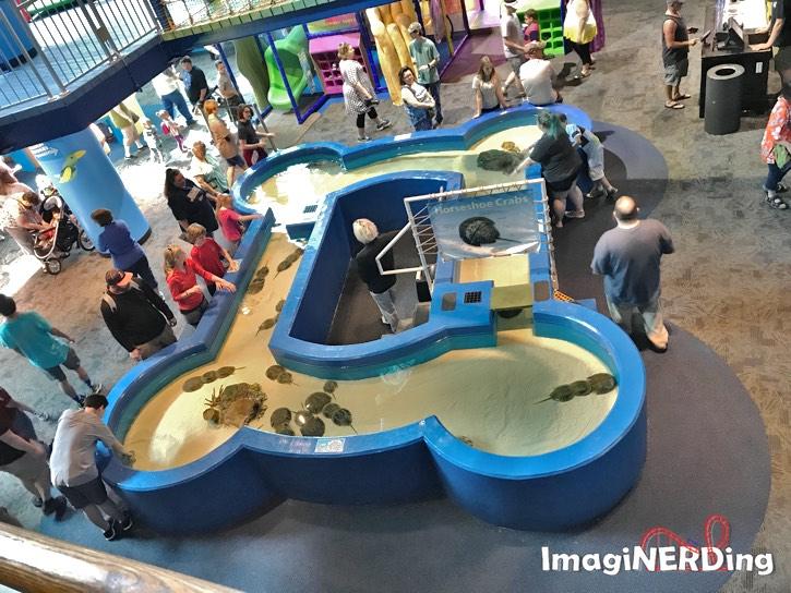 ripple's aquarium